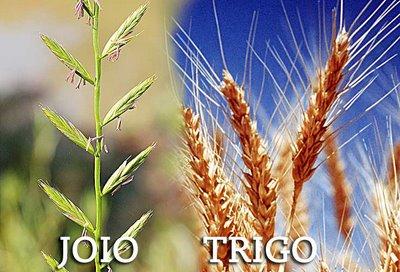 Para quem não conhece o joio e nem o trigo.